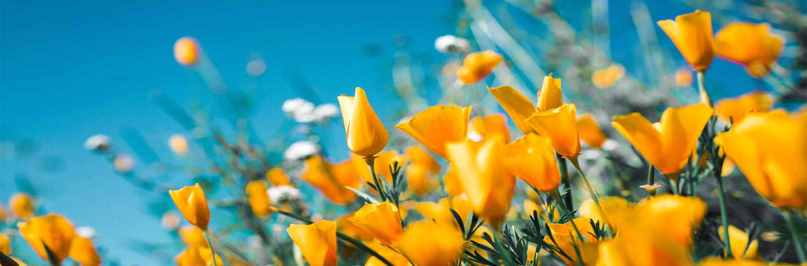 Des promos de printemps qui déchirent !